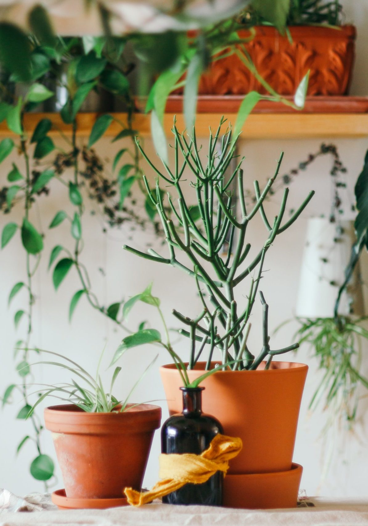 two green leafed plants in brown pot
